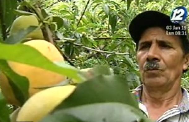 La cosecha de Melocotón en Chalatenango
