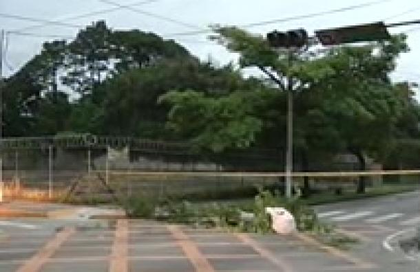 Carretera Panamericana bloqueada por árbol en Santa Tecla