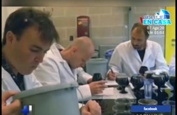Científicos buscan elaborar la 'cerveza perfecta'