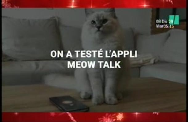 Geek: Conoce la app que te permite interactuar con gatos